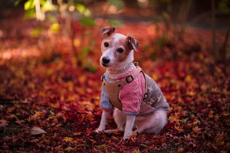 Portrait of dog sitting on ground during autumn