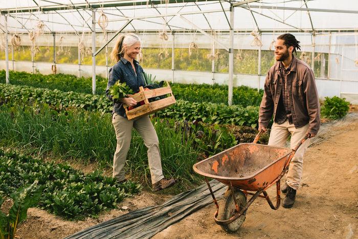People working in farm
