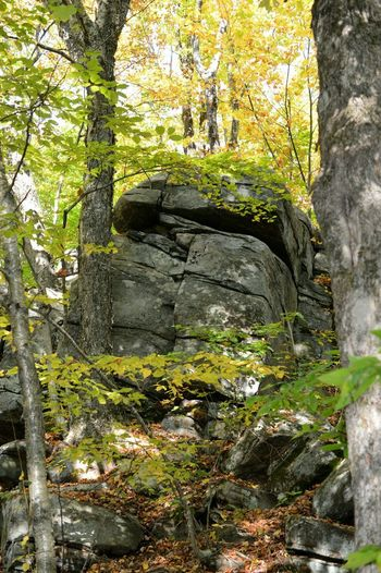 Stone wall by trees in forest