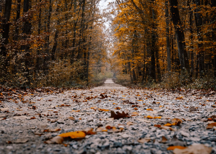 Pathway in forest, nobody, empty, way forward, autumn, fall.