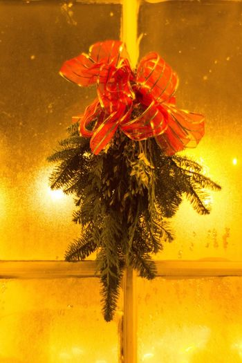 Plant Nature No People Red Close-up Christmas Decoration Beauty In Nature