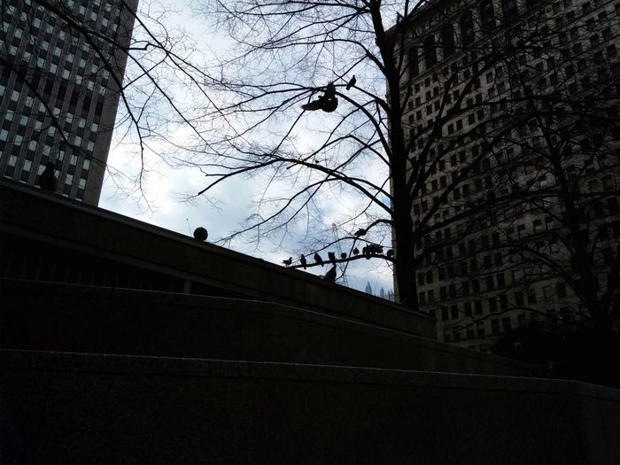 No Edit No Filter Downtown Pittsburgh Birds Citylife Cityview Looking Up Building Exterior Buildings Secret Spaces Personal Perspective The Graphic City