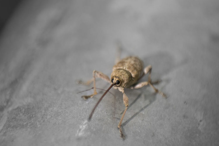 Abugslife Bug Makro Animal