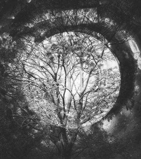 into the woods ... Overlay Editing EyeEmNewHere EyeEm Best Shots - Nature Beauty In Nature Abstract Photography Otherworldly Noir Black And White Winter Trees Tree No People Nature Branch Day Outdoors Close-up
