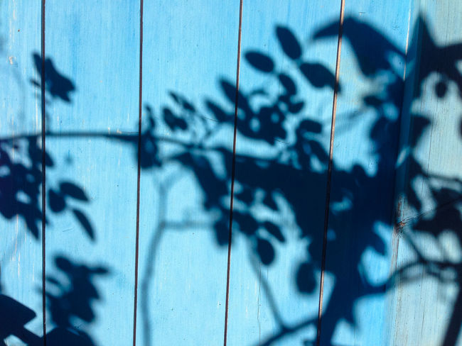Plant shadows Plant Sunlight Wall Abstract Blue Day Daylight Leaf Leaves Shadow Shadows And Light Wood - Material