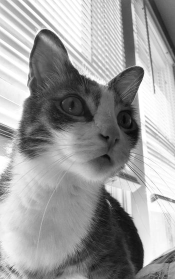 Blackandwhite Cat Domestic Cat Animal Themes Pets One Animal Animal Mammal Domestic Domestic Animals Feline Vertebrate Whisker Indoors  No People Close-up Window Animal Head