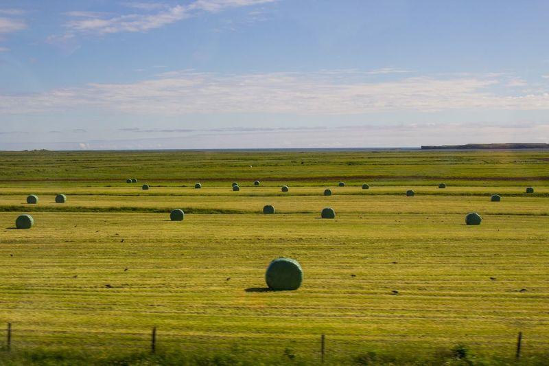 Fence Field Hay