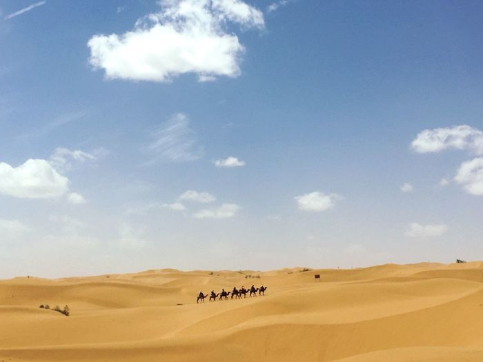 People Together Desert Desert Beauty China Camel Traveling Travel Photography Minimalism