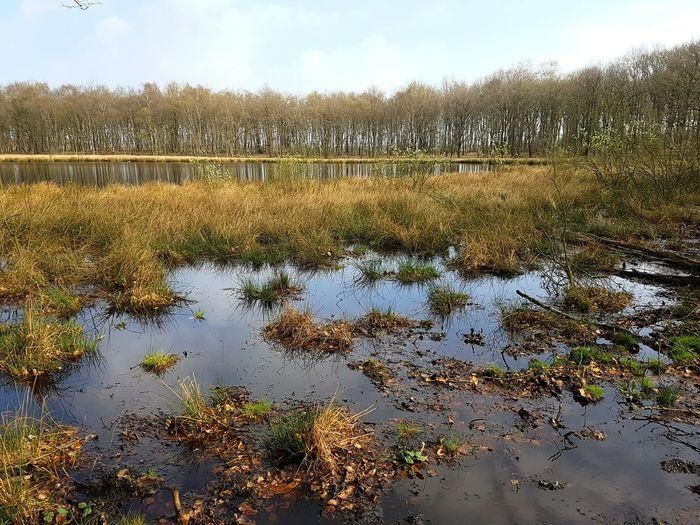 @ work, Hijkerveld, Drenthe, Nl Reflection Nature Water Tree Lake Outdoors Sky Grass Landscape Sound Of Silence Hiking Forest Tree Drenthe Hijkerveld