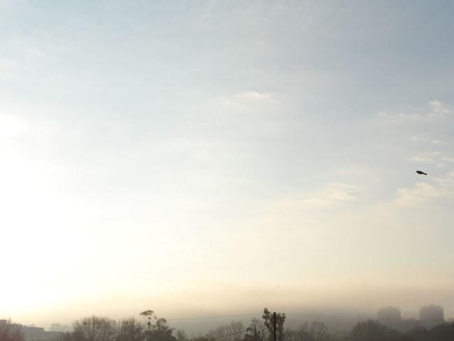 Sous la brume matinale Brume Brume Matinale I Love My City Dans Ma Ville Angouleme Derrière Ma Fenêtre Ciel Skyfie CIELFIE Sky Automne Autumn