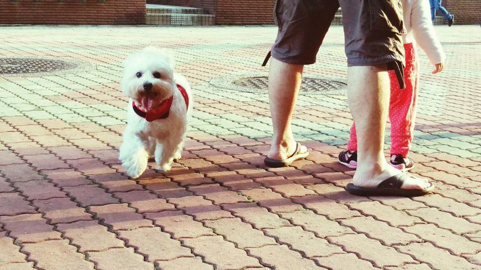 繼薇 Chi-wei Smile I Love My Dog Dogs DogLove She Is My Sister Happy Sunny Day Running Time 總算開懷大笑了(∩_∩)╯