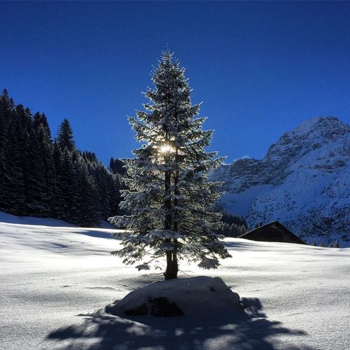 Tree on snow covered landscape against blue sky
