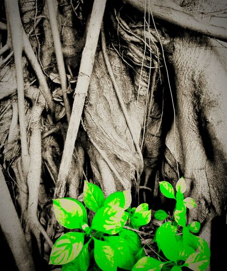 Leaf Plant Food Close-up Backgrounds Growth Nature Freshness No People Outdoors Day Tree Roots Of Tree Tree_collection  Back Green Trees Nature Beauty In Nature
