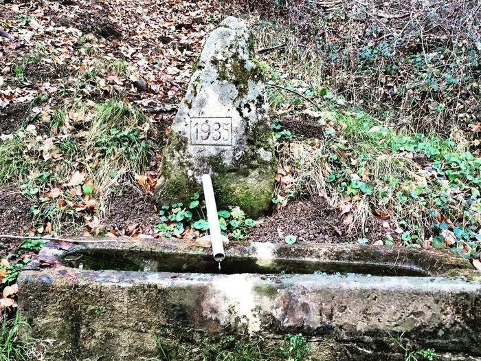 Brunnen Well  Taking Photos Schönbuch Nature EyeEm Natue Lover Nature_collection