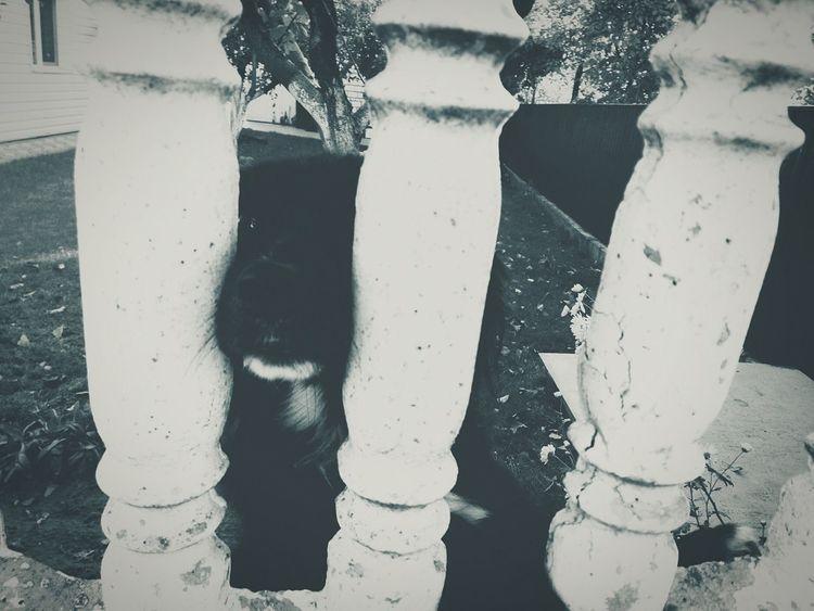 Outdoors Day Dog Fence Check This Out Open Edit Capture The Moment Week On Eyeem EyeEm Best Shots Enjoying Life Ukraine OpenEdit EyeEm Nature Lover Animals Mobilephotography EyeEmBestPics Bw Popular Photos Monochrome Photography EyeEm Gallery Taking Photos