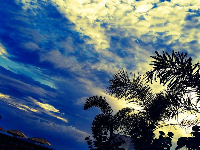 Evening Sky My Office Bangalore Winters Eye4photography  EyeEm Nature Lover