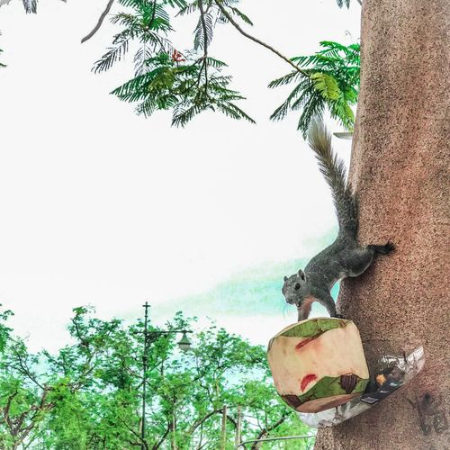 Tree Animals In The Wild One Animal Animal Themes Day Outdoors Nature No People Sky Animals IPhone Photography Thailand Mood Weekend Nature Close-up