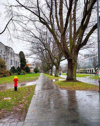 UBC Ubcshots Vancouverbc Britishcolumbia