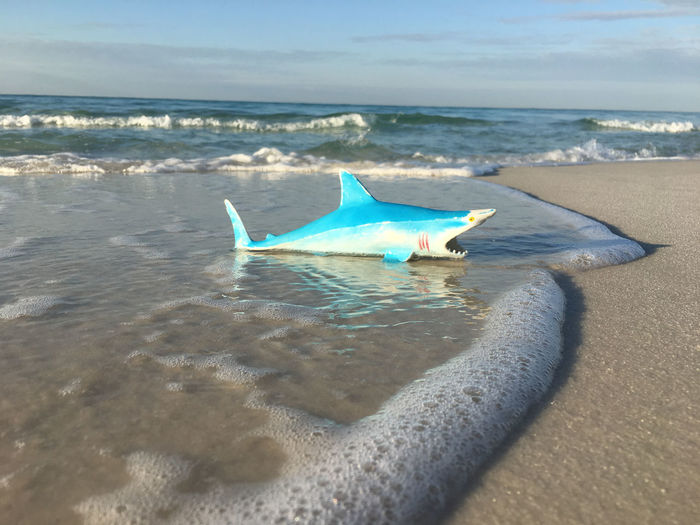 shark on the beach Humor Animal Themes Beach Beauty In Nature Day Horizon Over Water Nature No People Outdoors Sand Scenics Sea Sky Swimming Toy Water Wave Whimsical