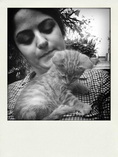 Tarçıncık... Cat♡ Cat Lovers Animals Animal #sweety #girl #animallovers #minik