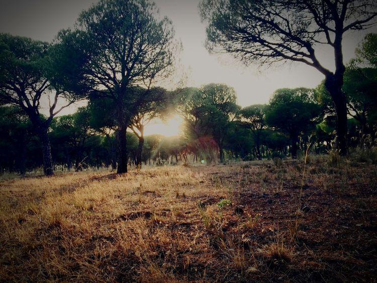 Pinar, Valladolid First Eyeem Photo Foto De La Hostia