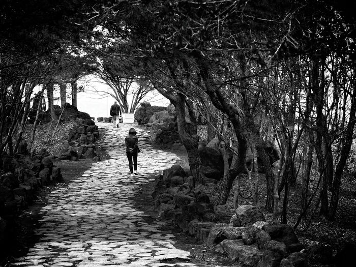 View of people walking on path in garden