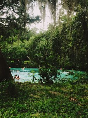 Silver Glen Springs, FL. Natural Springs Florida Life Snorkeling Water Nature Beauty In Nature Outdoors EyeEnNewHere The Week On EyeEm