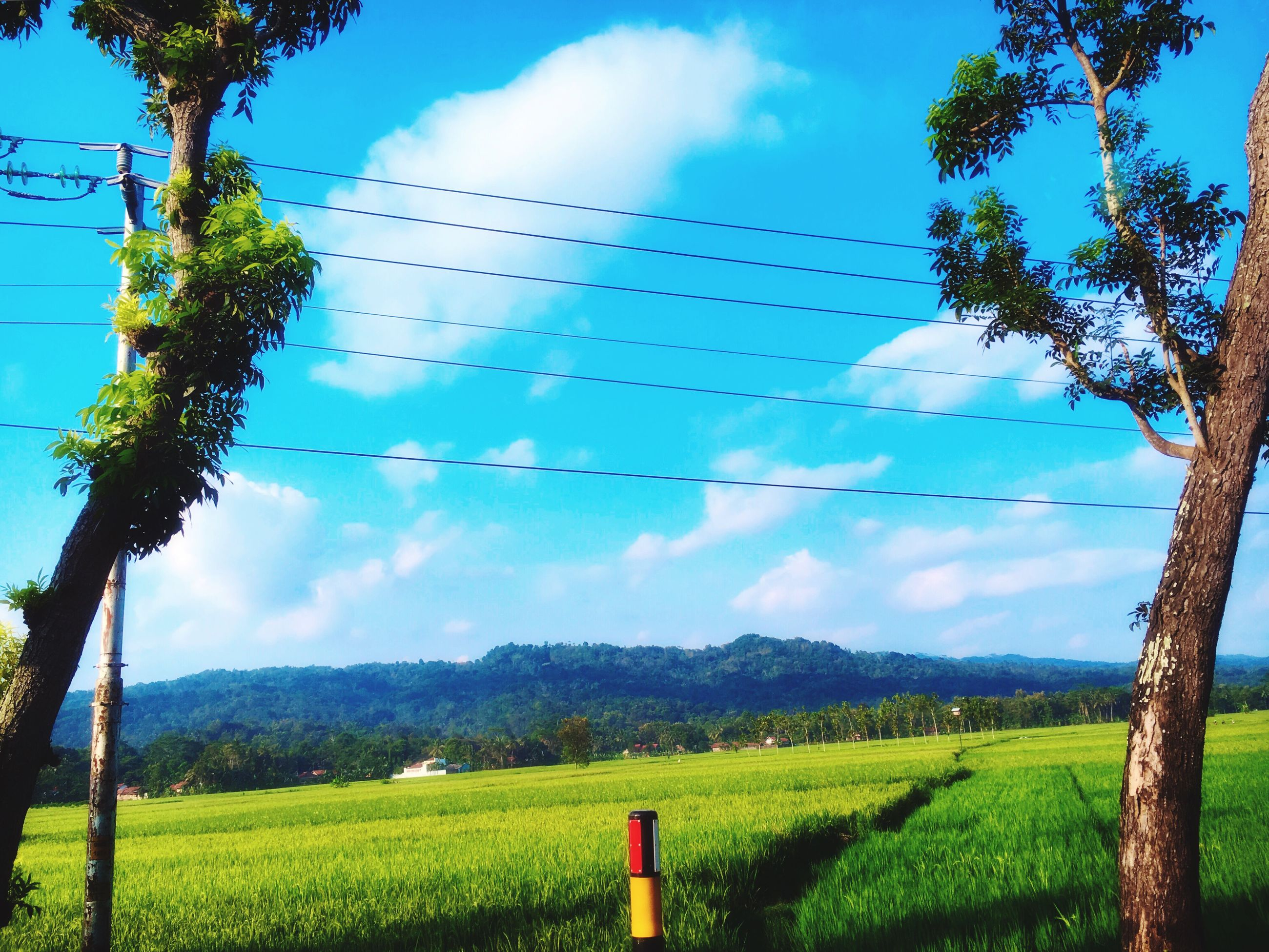 sky, landscape, field, tranquil scene, tranquility, scenics, rural scene, grass, beauty in nature, agriculture, nature, cloud - sky, green color, growth, cloud, blue, tree, grassy, non-urban scene, mountain, countryside, horizon over land, idyllic, day, no people, outdoors, green, plant, remote, cloudy, non urban scene, pole, hill