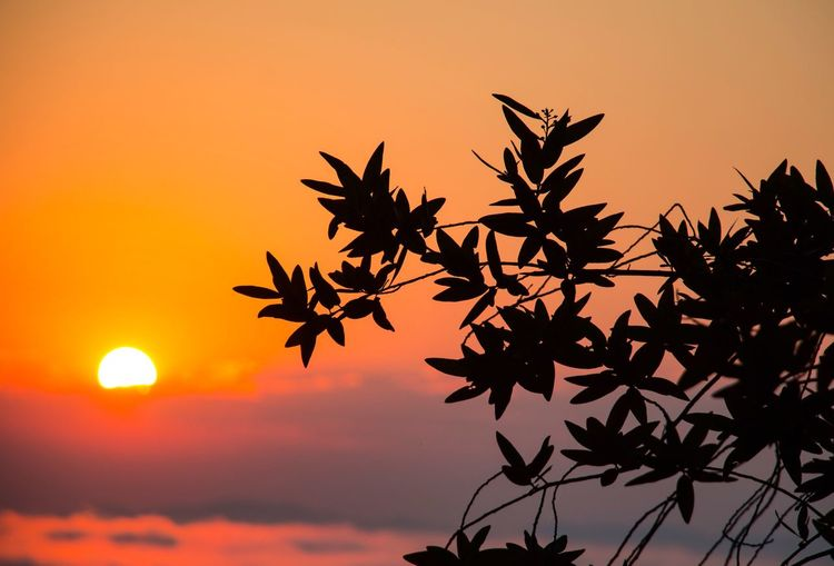 Orange Color Leaf Sunset Autumn Beauty In Nature Nature Sun Outdoors Sky No People Silhouette Scenics Close-up Tree Day