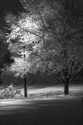 Night Lights Road Winter Black And White Blackandwhite Cold Cold Temperature Light And Shadow Nature Night No People Outdoors Season  Snow Snowing Winter