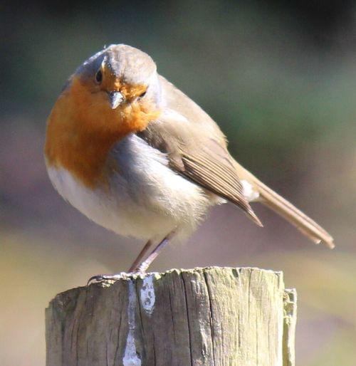 Birds Bird