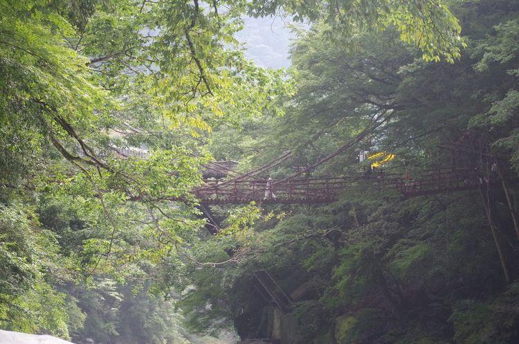 夏の始まり~♡だいぶスリリングでした((((;゚Д゚)))) 一眼レフカメラ Camera カメラ カメラ女子 Pentax K50 祖谷 祖谷かずら橋 かずら橋 川遊び