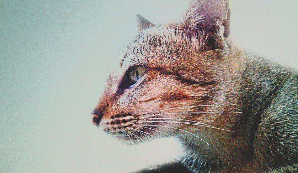 Cats Of EyeEm Vintage2 Catlovers Cats 🐱 Thecatcameback EyeEm Indonesia Yogyakarta,indonesia