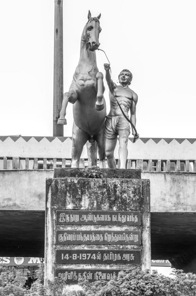 Statue of a man and a horse in Chennai in India Chennai Horse Statue India Art And Craft Blackandwhite Photography Day Human Representation Low Angle View Male Likeness Man And Horse Monochrome No People Outdoors Sculpture Statue