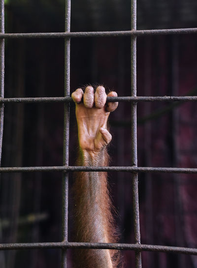 Cropped hand of monkey holding cage