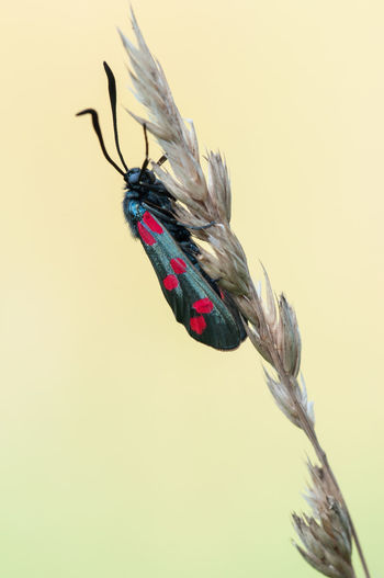 Close-up of insect against blurred background