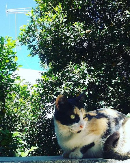 Cat Cats Cats_of_instagram Catoftheday Catlover Instacat Green Trees Bluesky Instapic Picoftheday Athensvoice Lifo