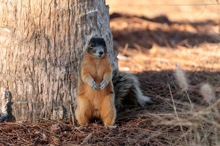 Squirrel against tree trunk on field