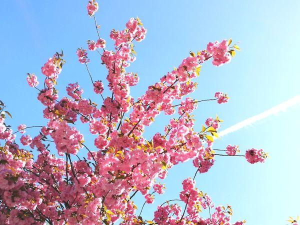 Tree Clear Sky Flower Branch Sunlight Sky