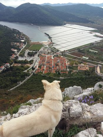 dog, town, salt plant, bay Animal Themes Domestic Animals High Angle View Mountain Mammal Pets Outdoors Nature Water