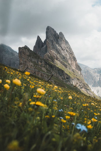 Mountain Plant Sky Beauty In Nature Flower Nature Cloud - Sky Yellow Flowering Plant Growth Land Day Mountain Range Scenics - Nature Landscape No People Tranquility Environment Rock Field Outdoors Mountain Peak Formation Seceda Dolomiti