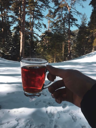 Çay hazır ☕️🍃 Drink Tree Cold Temperature Refreshment Glass Snow Food And Drink Plant Winter Nature Drinking Glass Day Hot Drink Land