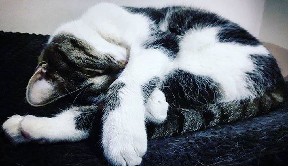 Cat Catstagram Meow Catcaffe Cracow Kot Kotek Kotełek Kotełeczek Kociakawiarnia Krakow