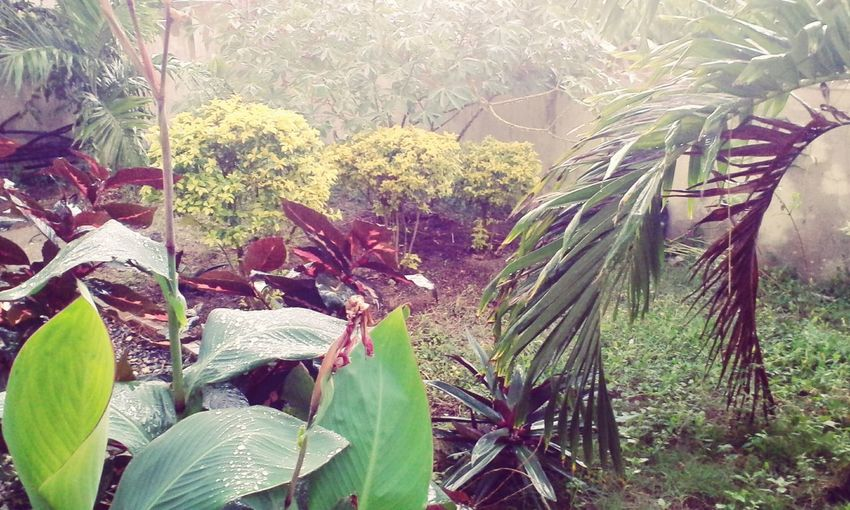 Nature Rainy