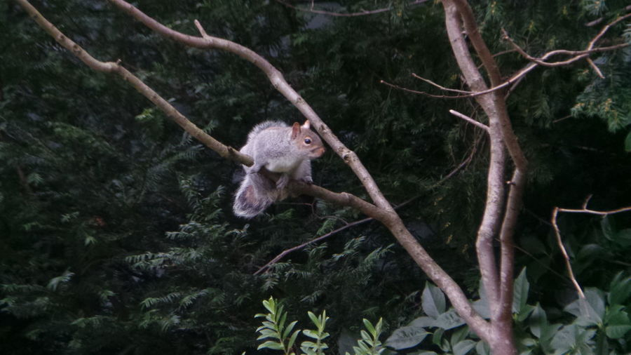 wished I caught the jump Squirrel Saltwell Park Taking Photos Nature