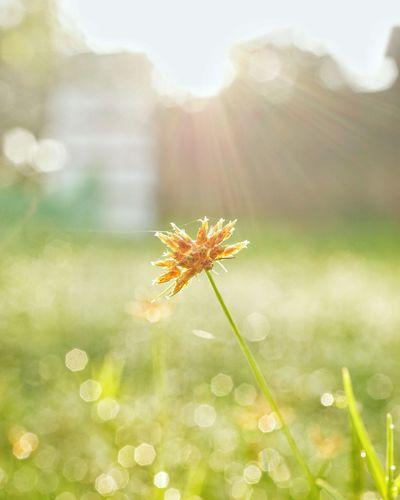 flower grass in