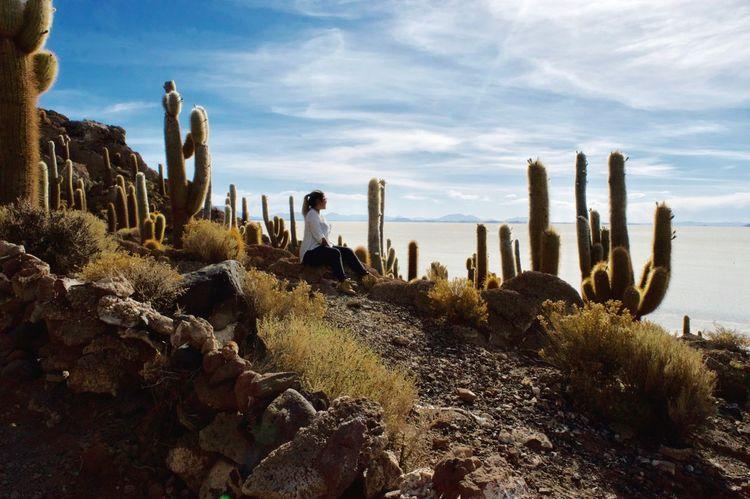 Beauty In Nature Isla Incahuasi Cactus 🌵