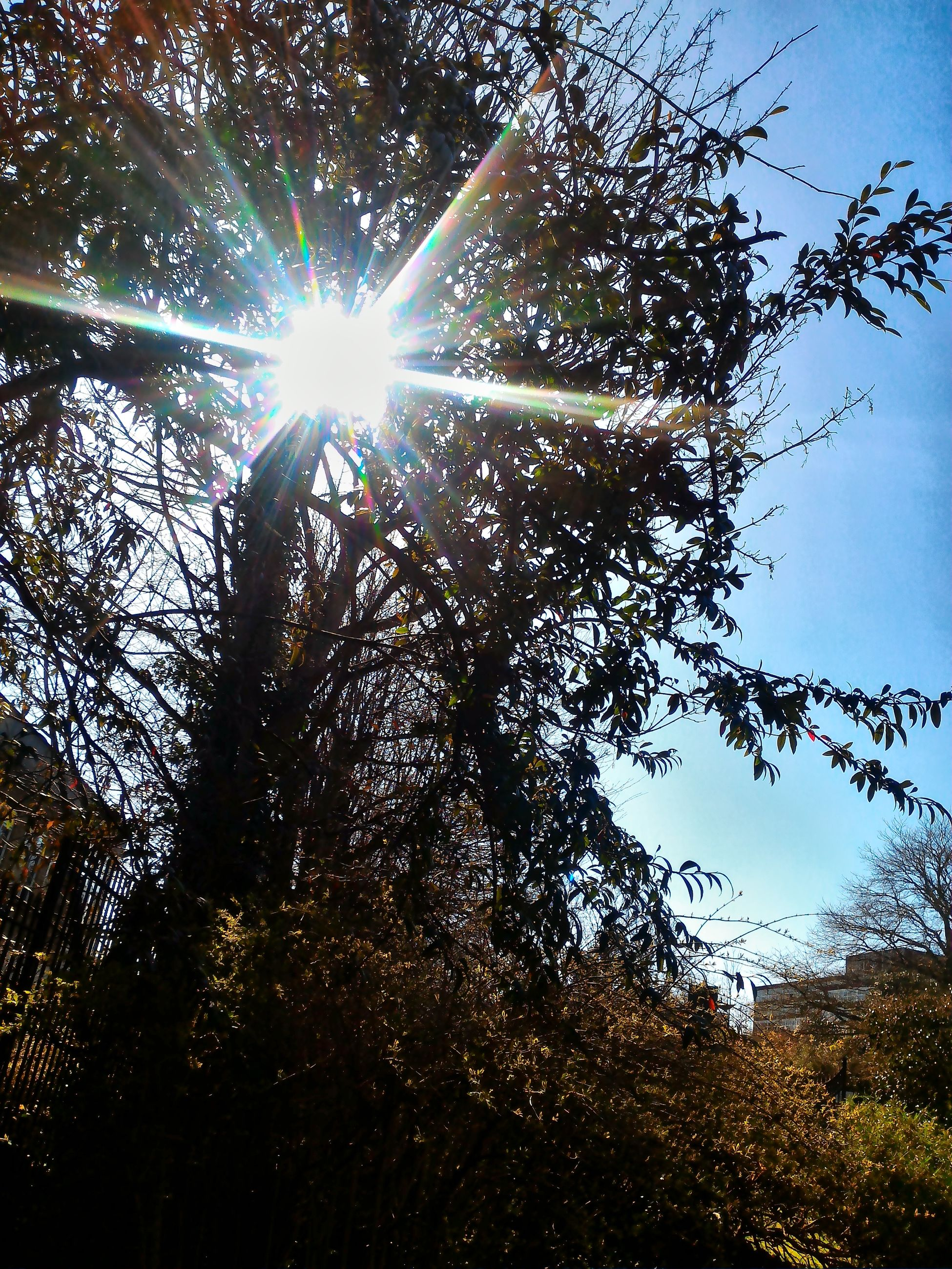 sun, sunbeam, low angle view, lens flare, sunlight, tree, bright, back lit, nature, sunny, growth, sky, streaming, shiny, clear sky, beauty in nature, tranquility, silhouette, glowing, branch