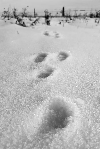 Rabbit tracks Rabbit Tracks Abstract Close Up Black & White Ground Level View Winter Nature Day Cold Temperature Snow Full Frame No People Beauty In Nature