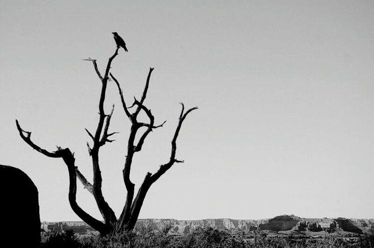 moab moment Crow Shillouette Tree Moab, Utah Eye4black&white  Black And White Photography Camping Hikingadventures Desert Beauty